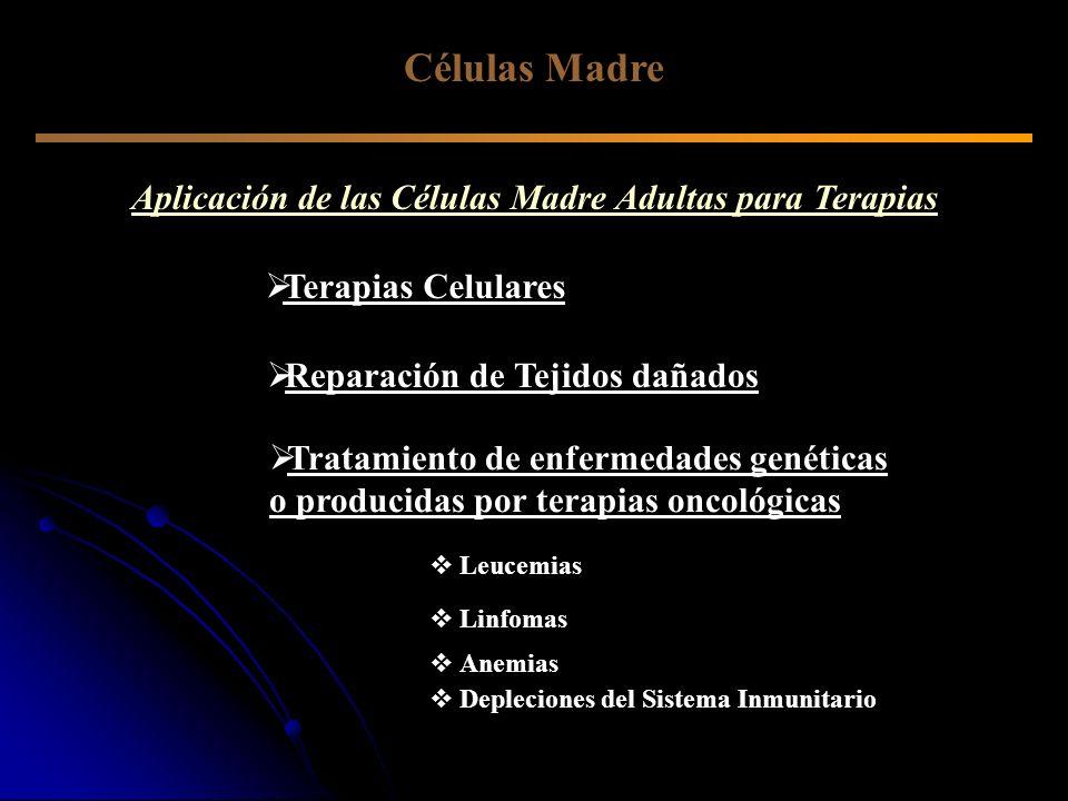 Aplicación de las Células Madre Adultas para Terapias Células Madre Terapias Celulares Reparación de Tejidos dañados Tratamiento de enfermedades genét