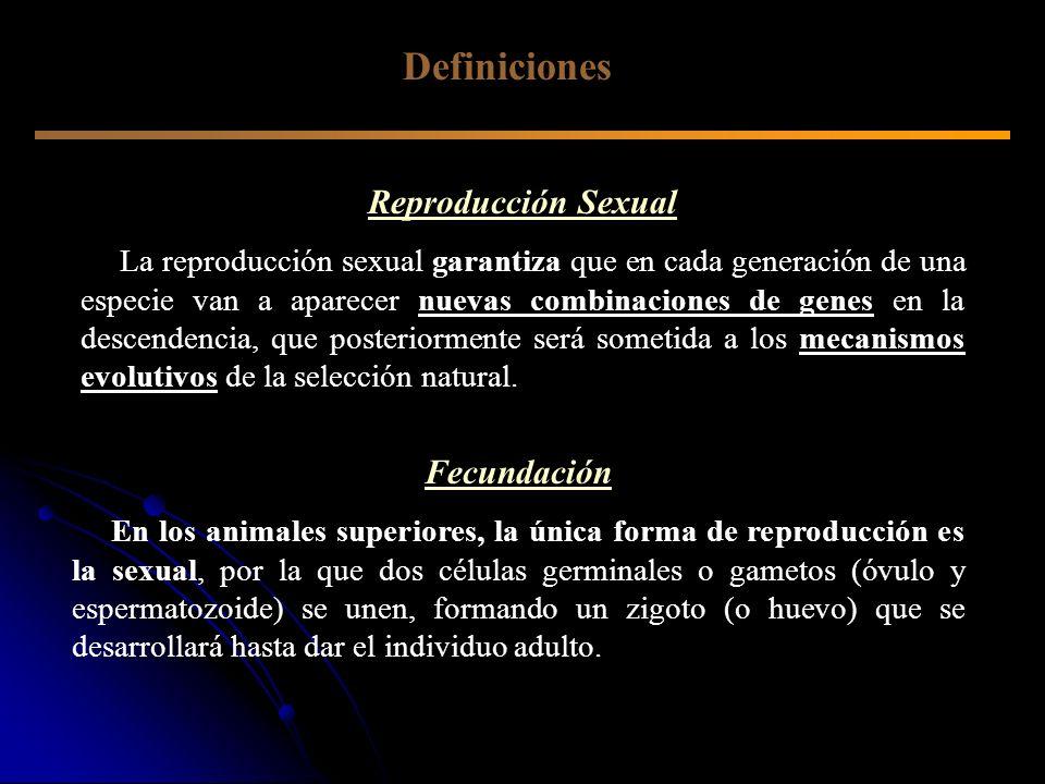 Definiciones Reproducción Sexual La reproducción sexual garantiza que en cada generación de una especie van a aparecer nuevas combinaciones de genes e