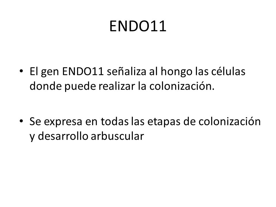 ENDO11 El gen ENDO11 señaliza al hongo las células donde puede realizar la colonización. Se expresa en todas las etapas de colonización y desarrollo a
