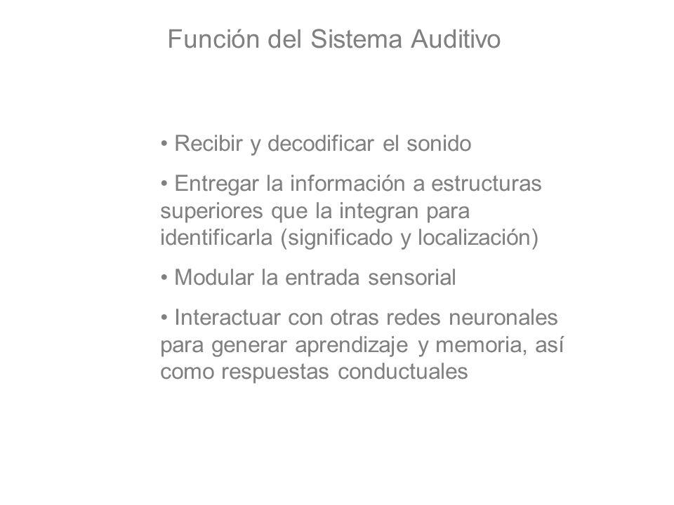 Función del Sistema Auditivo Recibir y decodificar el sonido Entregar la información a estructuras superiores que la integran para identificarla (sign