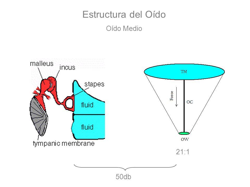 Estructura del Oído Oído Medio 21:1 50db
