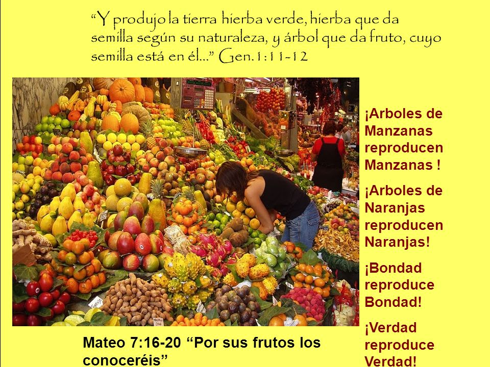 Y produjo la tierra hierba verde, hierba que da semilla según su naturaleza, y árbol que da fruto, cuyo semilla está en él… Gen.1:11-12 ¡Arboles de Ma