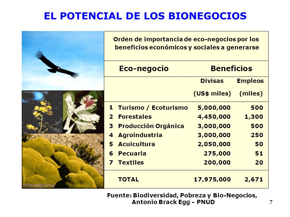 7 Orden de importancia de eco-negocios por los beneficios económicos y sociales a generarse Eco-negocio Beneficios DivisasEmpleos (US$ miles) (miles)