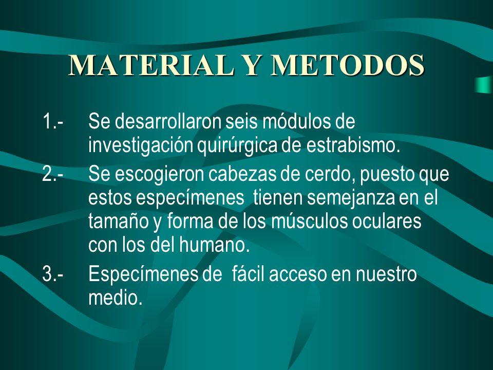 MATERIAL Y METODOS 1.-Se desarrollaron seis módulos de investigación quirúrgica de estrabismo. 2.-Se escogieron cabezas de cerdo, puesto que estos esp