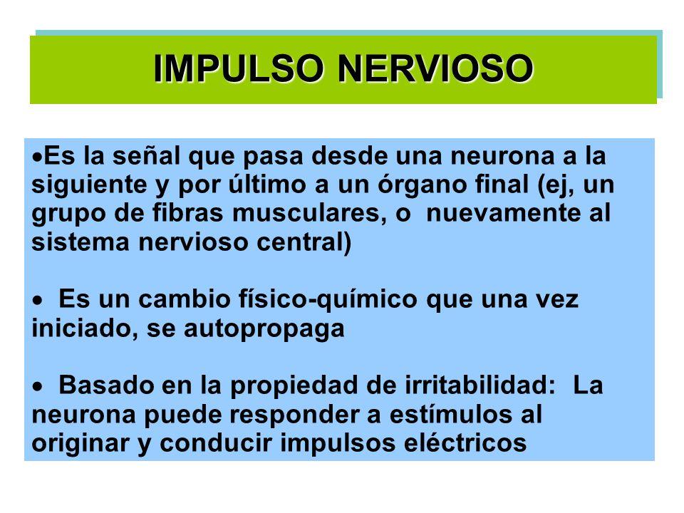 Dirección de la transmisión del IN.