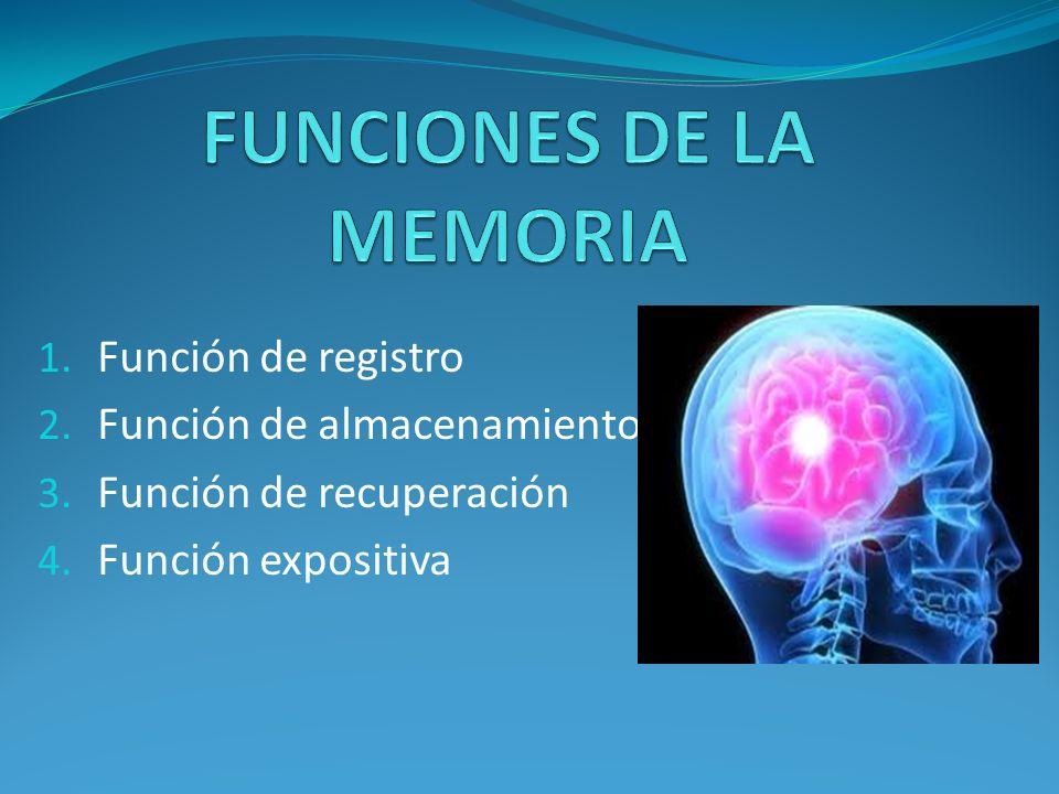 Memoria sensorial (MS): es la que se pone en acción de manera inmediata al contacto con las informaciones manteniéndolas brevemente.