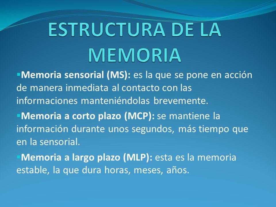 Memoria sensorial (MS): es la que se pone en acción de manera inmediata al contacto con las informaciones manteniéndolas brevemente. Memoria a corto p