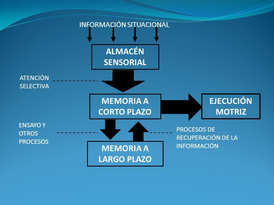 INFORMACIÓN SITUACIONAL ALMACÉN SENSORIAL MEMORIA A CORTO PLAZO ATENCIÓN SELECTIVA MEMORIA A LARGO PLAZO EJECUCIÓN MOTRIZ ENSAYO Y OTROS PROCESOS PROC
