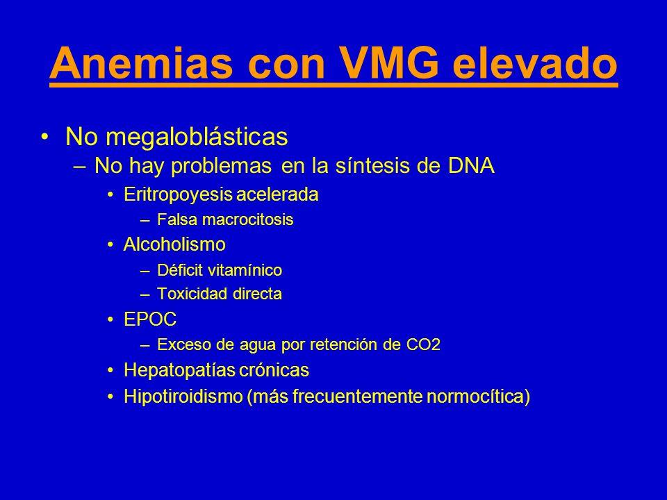 Anemias con VMG elevado No megaloblásticas –No hay problemas en la síntesis de DNA Eritropoyesis acelerada –Falsa macrocitosis Alcoholismo –Déficit vi