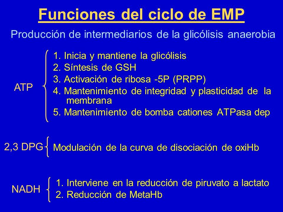 Funciones del ciclo de EMP 1. Inicia y mantiene la glicólisis 2. Síntesis de GSH 3. Activación de ribosa -5P (PRPP) 4. Mantenimiento de integridad y p