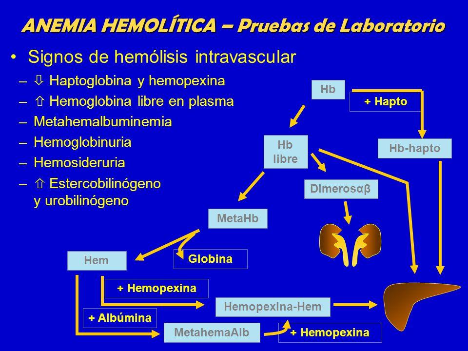 – Haptoglobina y hemopexina – Hemoglobina libre en plasma –Metahemalbuminemia –Hemoglobinuria –Hemosideruria – Estercobilinógeno y urobilinógeno ANEMI