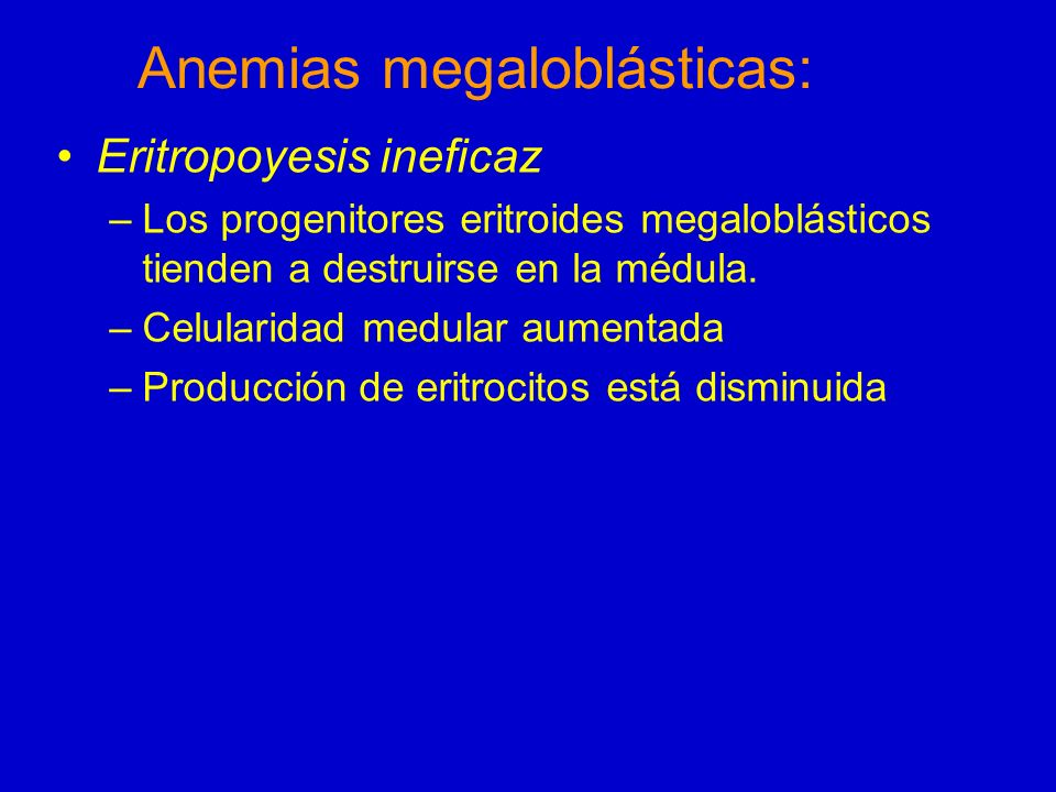 Anemias megaloblásticas: Eritropoyesis ineficaz –Los progenitores eritroides megaloblásticos tienden a destruirse en la médula. –Celularidad medular a