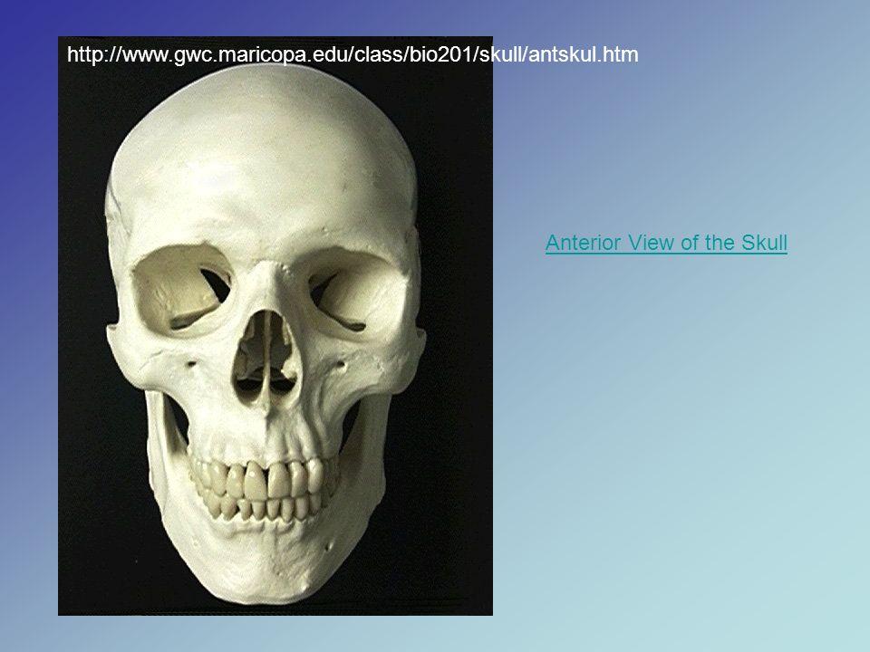 La mayoría de los tumores pequeños de la glándula salival comienzan en el paladar superior (cielo de la boca)..