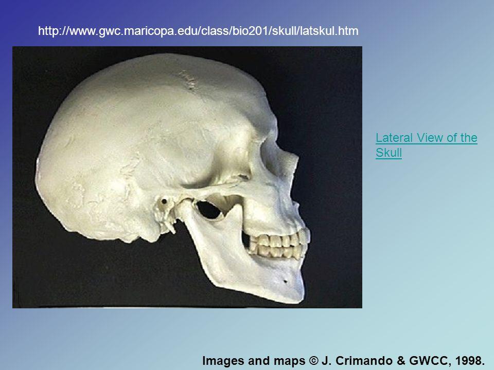 www.dochazenfield.com/sinus_surgery.htm
