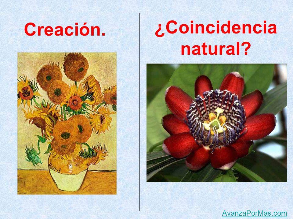 Creación ¿Coincidencia natural AvanzaPorMas.com
