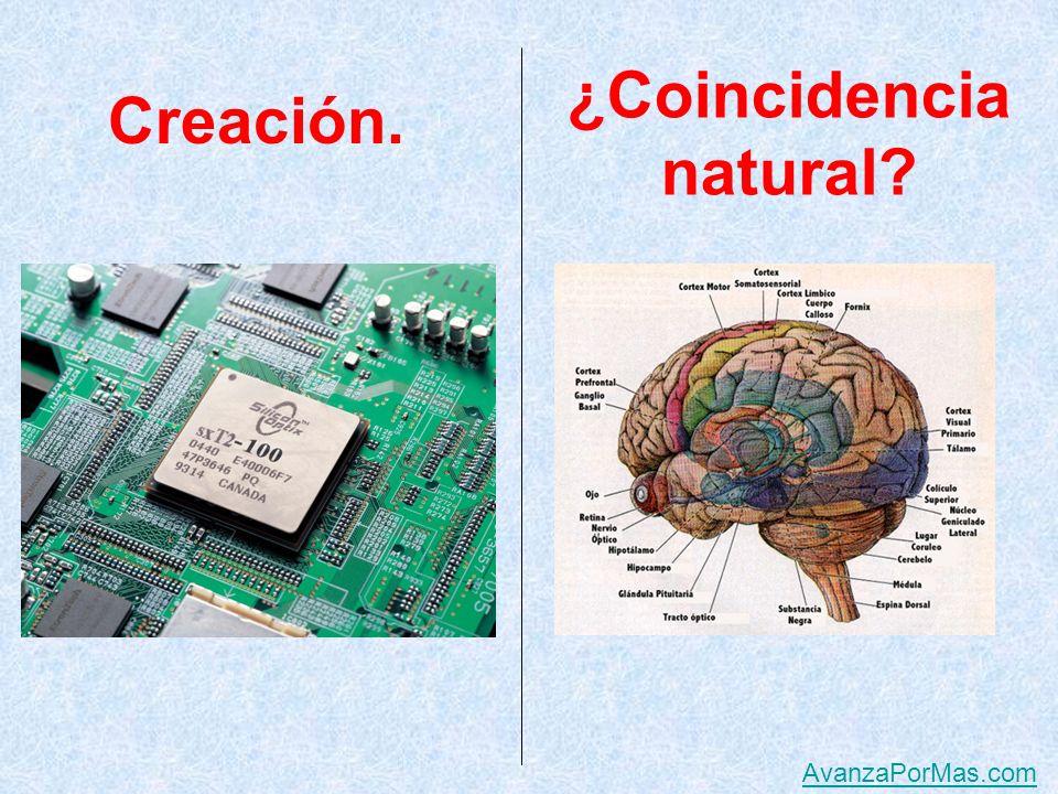Decimos que ésta es una creación Y algunos afirman que ésta es apenas una coincidencia natural.