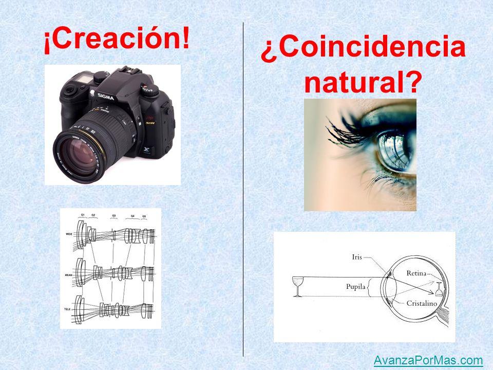 Creación. ¿Coincidencia natural AvanzaPorMas.com