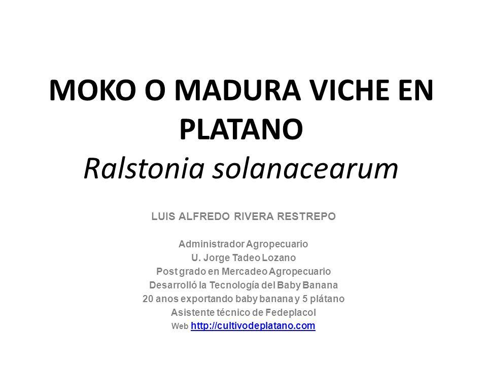 MOKO O MADURA VICHE EN PLATANO Ralstonia solanacearum LUIS ALFREDO RIVERA RESTREPO Administrador Agropecuario U. Jorge Tadeo Lozano Post grado en Merc
