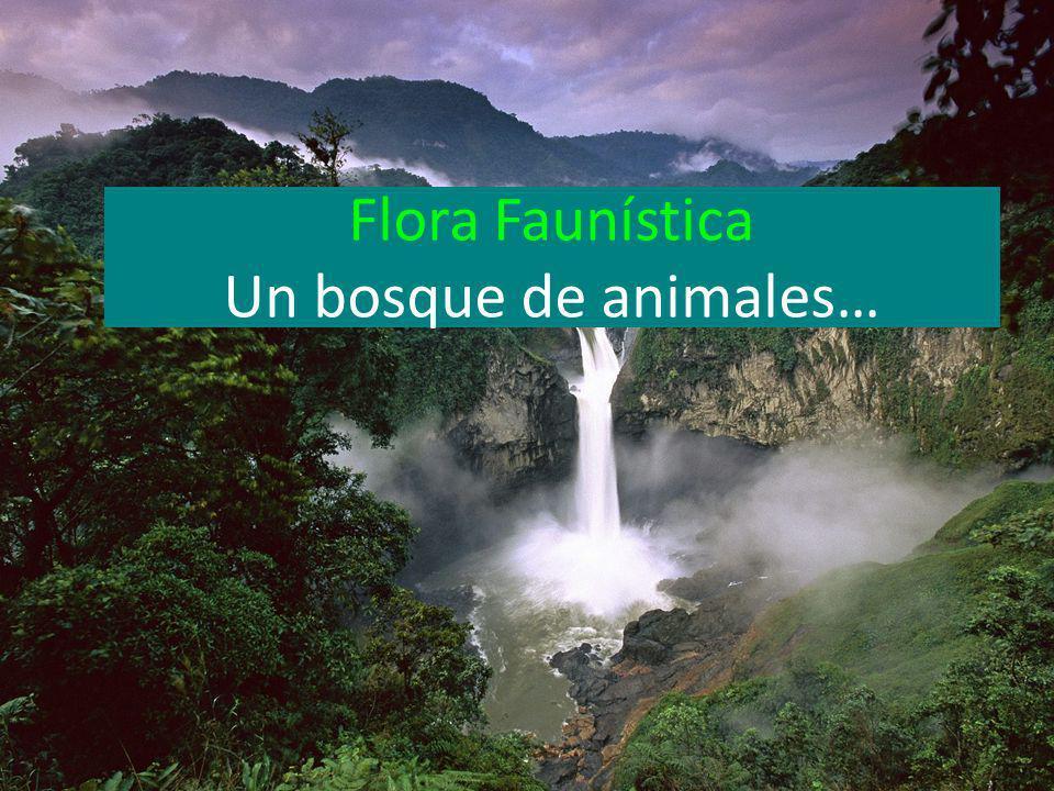 Flora Faunística Un bosque de animales…