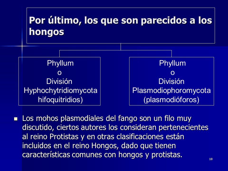 10 Por último, los que son parecidos a los hongos Los mohos plasmodiales del fango son un filo muy discutido, ciertos autores los consideran perteneci