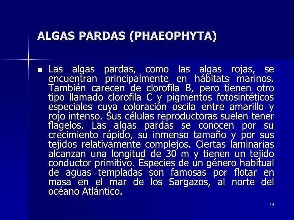 14 ALGAS PARDAS (PHAEOPHYTA) Las algas pardas, como las algas rojas, se encuentran principalmente en hábitats marinos. También carecen de clorofila B,