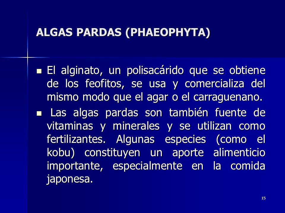 15 ALGAS PARDAS (PHAEOPHYTA) El alginato, un polisacárido que se obtiene de los feofitos, se usa y comercializa del mismo modo que el agar o el carrag