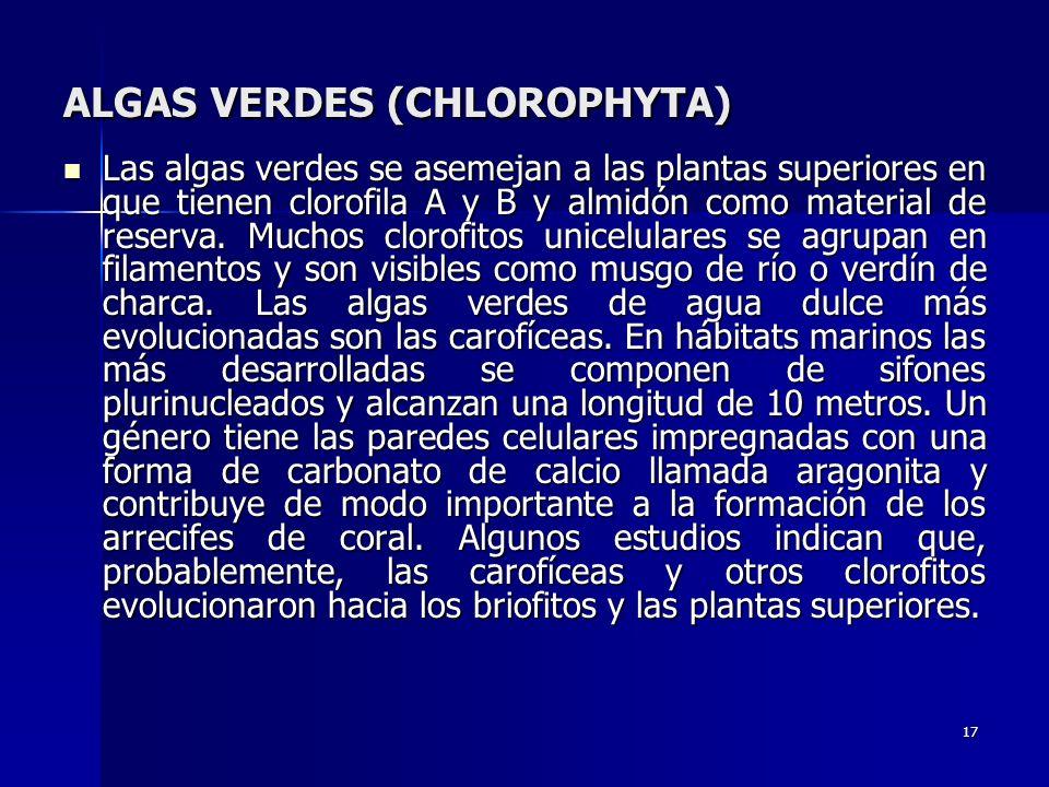 17 ALGAS VERDES (CHLOROPHYTA) Las algas verdes se asemejan a las plantas superiores en que tienen clorofila A y B y almidón como material de reserva.