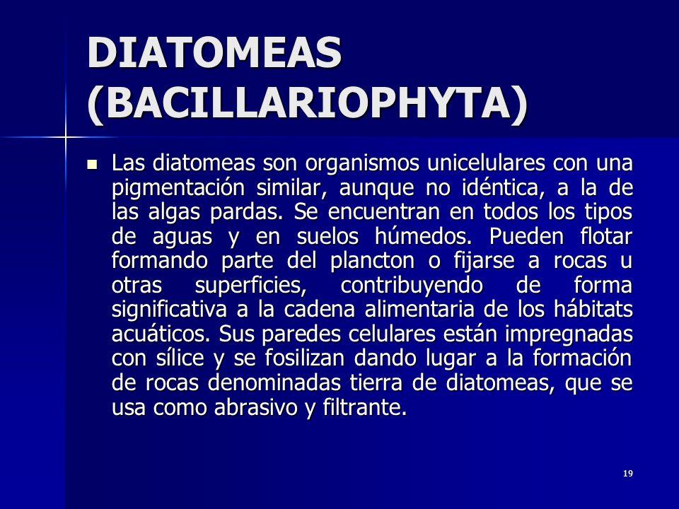 19 DIATOMEAS (BACILLARIOPHYTA) Las diatomeas son organismos unicelulares con una pigmentación similar, aunque no idéntica, a la de las algas pardas. S