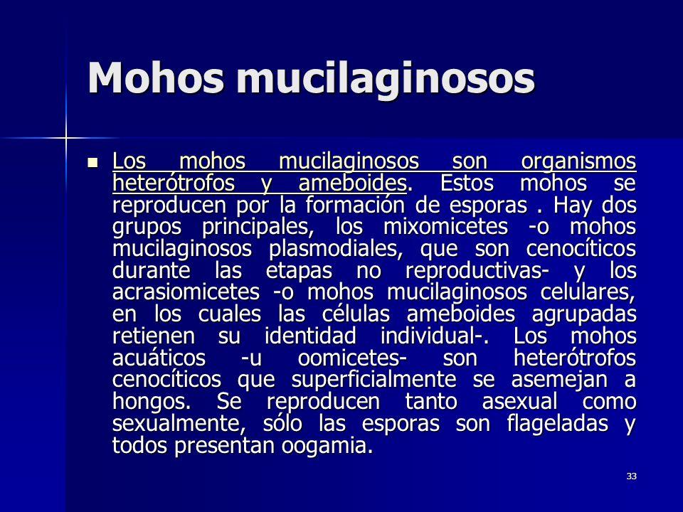 33 Mohos mucilaginosos Los mohos mucilaginosos son organismos heterótrofos y ameboides. Estos mohos se reproducen por la formación de esporas. Hay dos