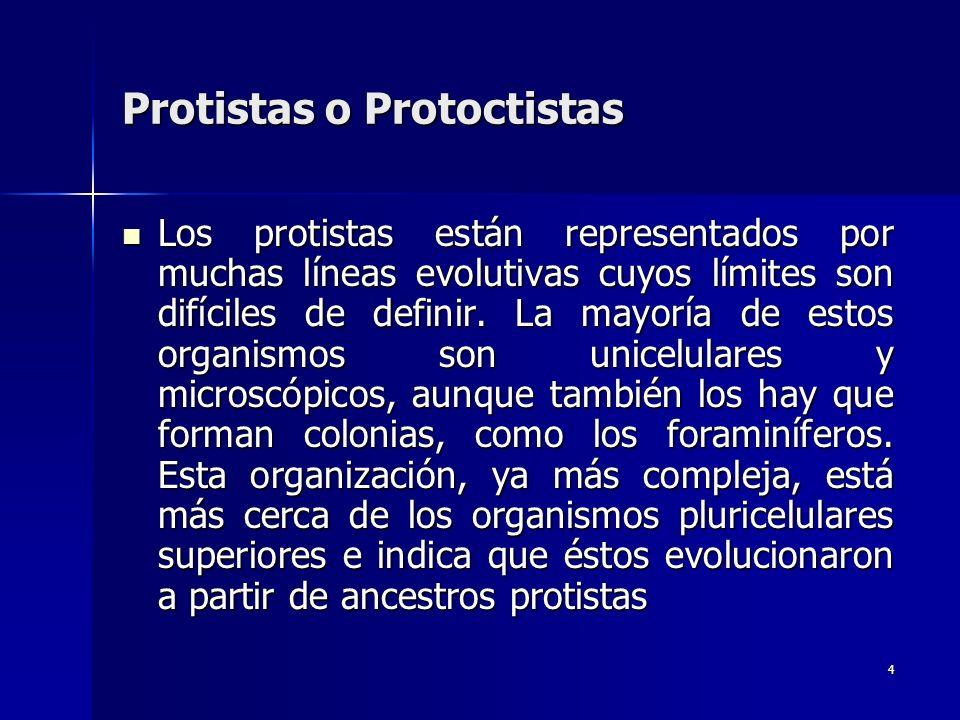 4 Protistas o Protoctistas Los protistas están representados por muchas líneas evolutivas cuyos límites son difíciles de definir. La mayoría de estos