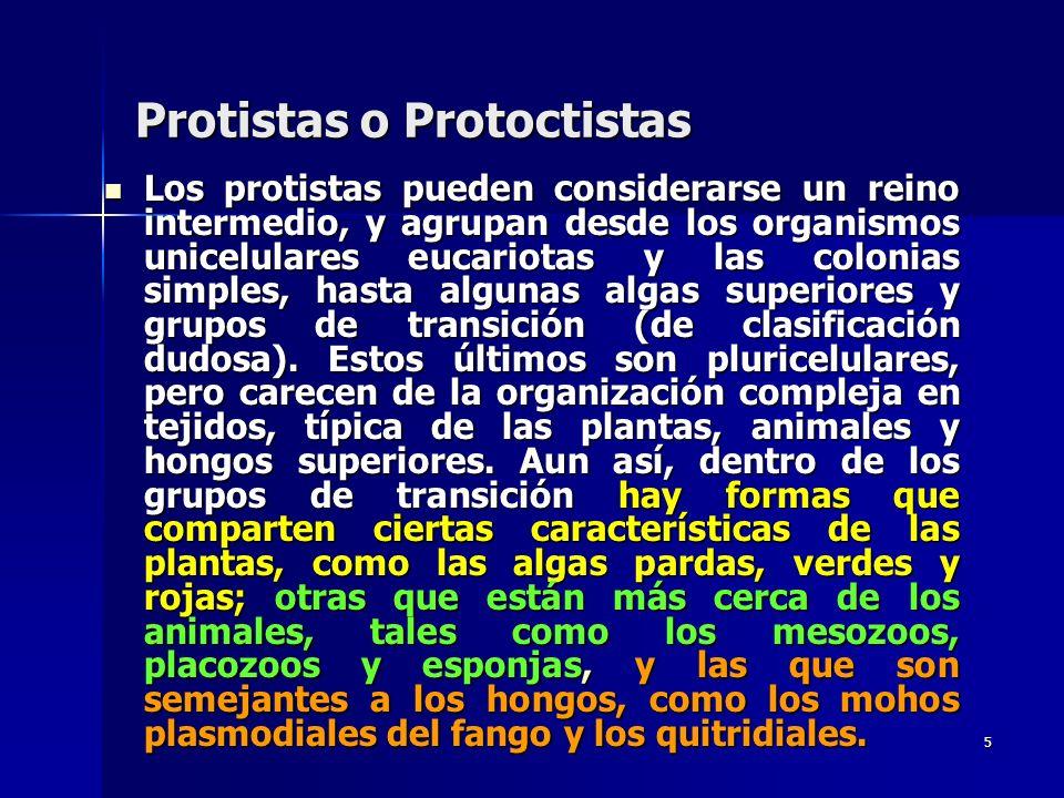5 Protistas o Protoctistas Los protistas pueden considerarse un reino intermedio, y agrupan desde los organismos unicelulares eucariotas y las colonia