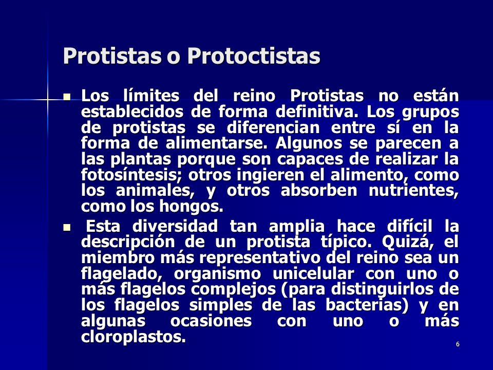 6 Protistas o Protoctistas Los límites del reino Protistas no están establecidos de forma definitiva. Los grupos de protistas se diferencian entre sí