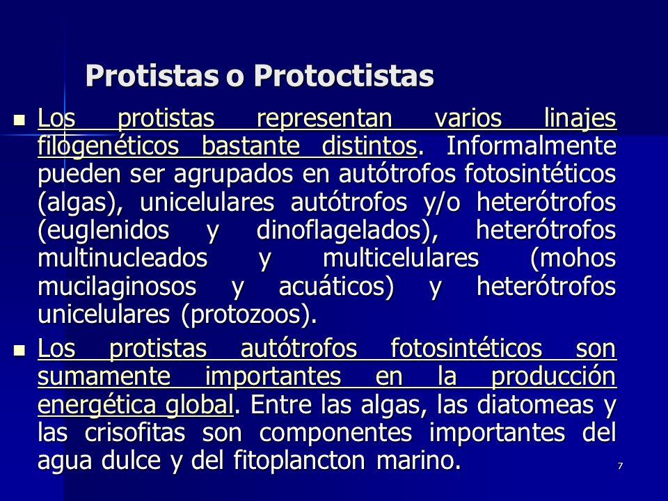 7 Protistas o Protoctistas Los protistas representan varios linajes filogenéticos bastante distintos. Informalmente pueden ser agrupados en autótrofos