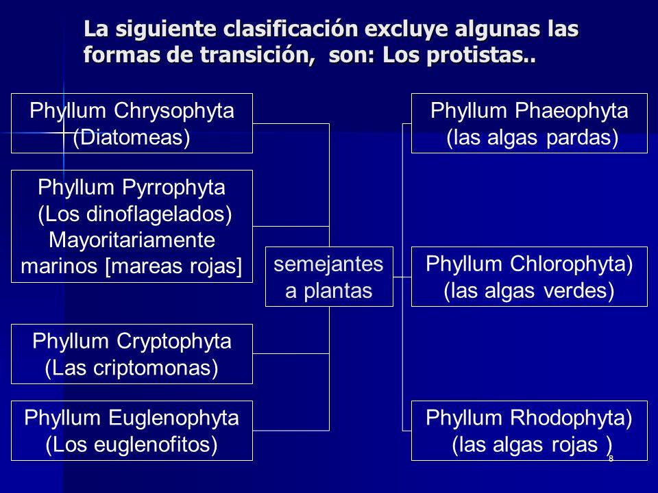 8 La siguiente clasificación excluye algunas las formas de transición, son: Los protistas.. Phyllum Chrysophyta (Diatomeas) Phyllum Pyrrophyta (Los di