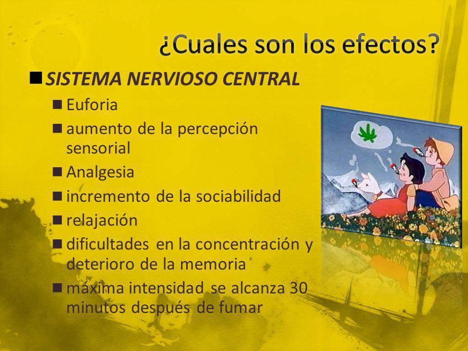 SISTEMA NERVIOSO CENTRAL Euforia aumento de la percepción sensorial Analgesia incremento de la sociabilidad relajación dificultades en la concentració