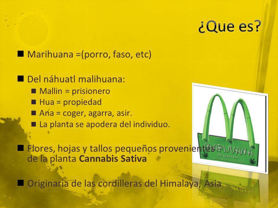 Marihuana =(porro, faso, etc) Del náhuatl malihuana: Mallin = prisionero Hua = propiedad Ana = coger, agarra, asir. La planta se apodera del individuo