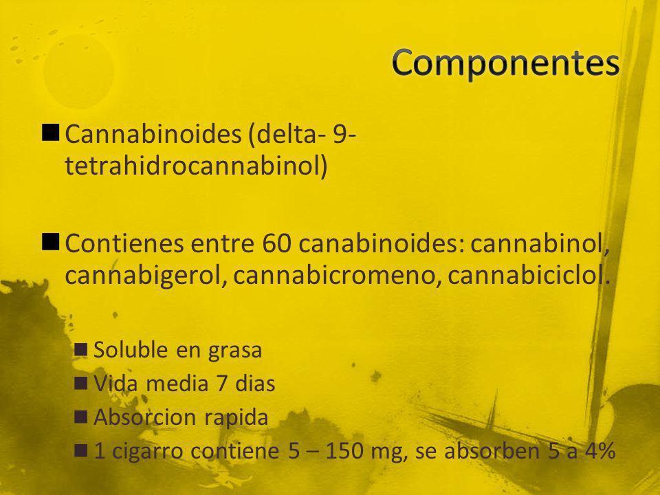 Cannabinoides (delta- 9- tetrahidrocannabinol) Contienes entre 60 canabinoides: cannabinol, cannabigerol, cannabicromeno, cannabiciclol. Soluble en gr