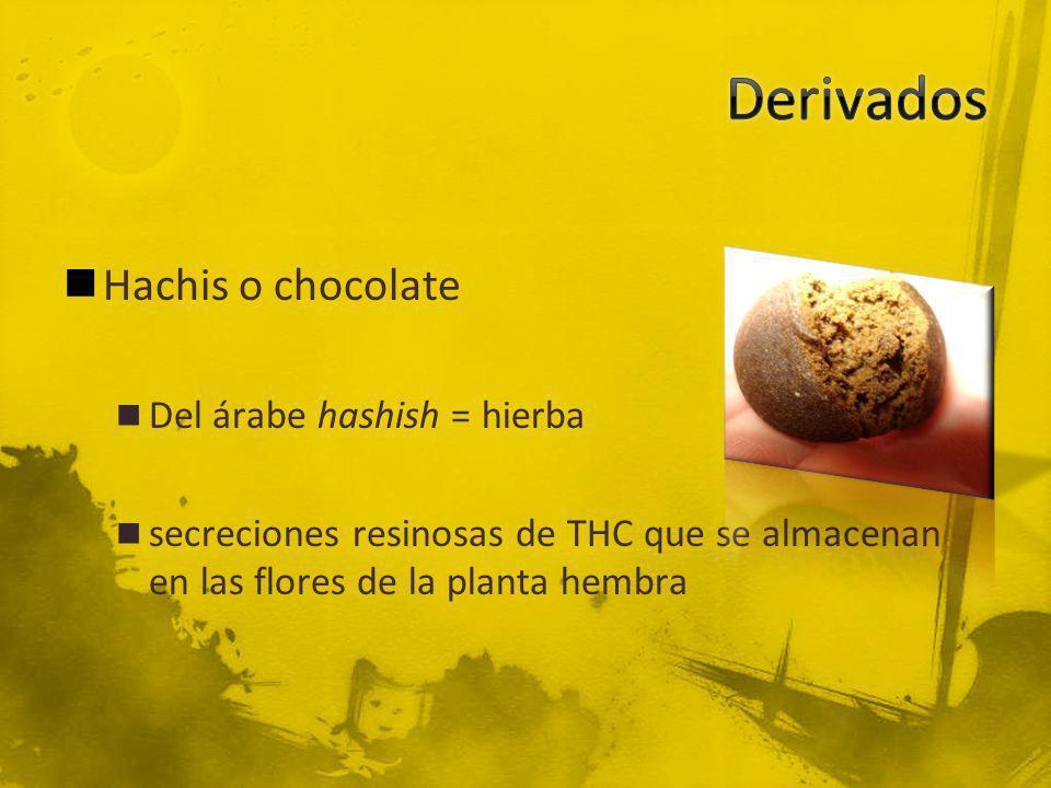 Hachis o chocolate Del árabe hashish = hierba secreciones resinosas de THC que se almacenan en las flores de la planta hembra