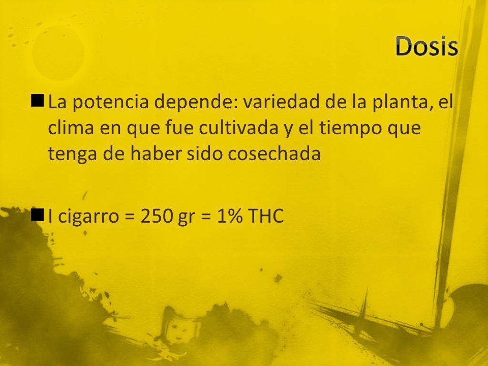 La potencia depende: variedad de la planta, el clima en que fue cultivada y el tiempo que tenga de haber sido cosechada I cigarro = 250 gr = 1% THC