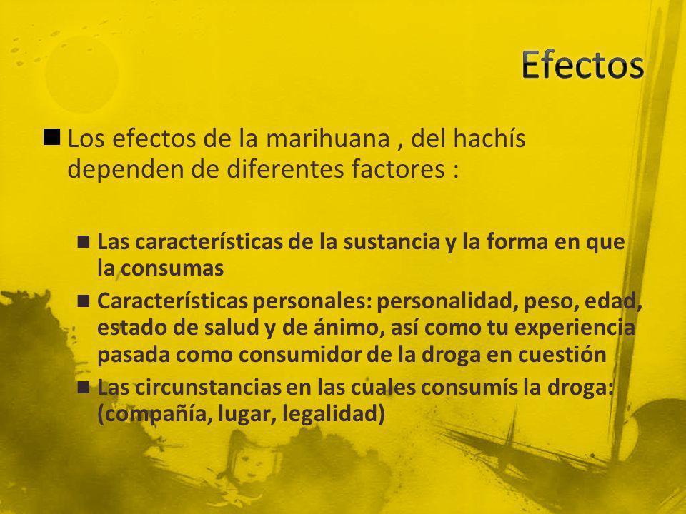 Los efectos de la marihuana, del hachís dependen de diferentes factores : Las características de la sustancia y la forma en que la consumas Caracterís