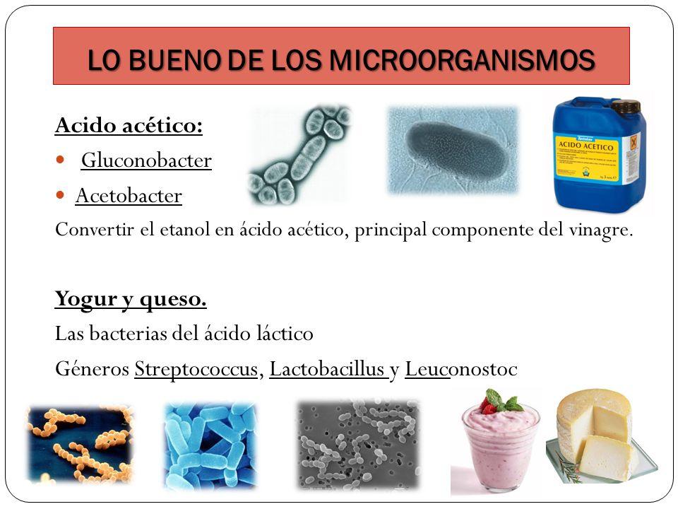 LO BUENO DE LOS MICROORGANISMOS Acido acético: Gluconobacter Acetobacter Convertir el etanol en ácido acético, principal componente del vinagre. Yogur