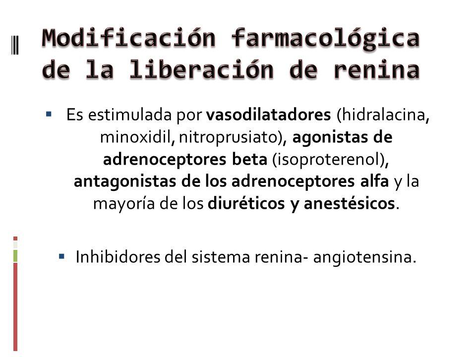 Es estimulada por vasodilatadores (hidralacina, minoxidil, nitroprusiato), agonistas de adrenoceptores beta (isoproterenol), antagonistas de los adren