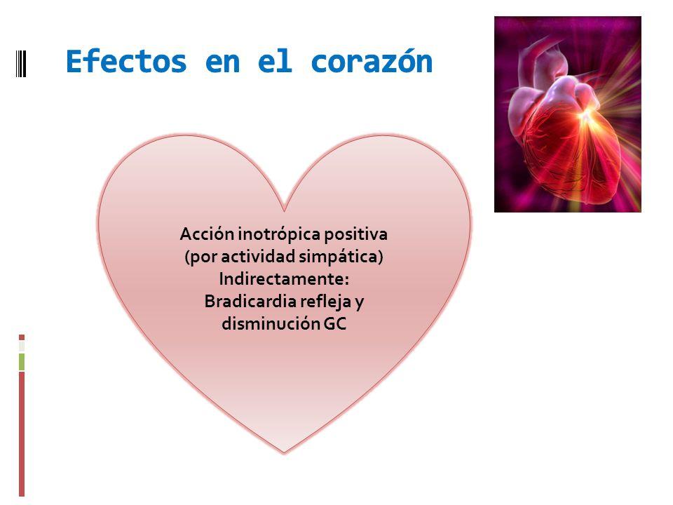 Acción inotrópica positiva (por actividad simpática) Indirectamente: Bradicardia refleja y disminución GC