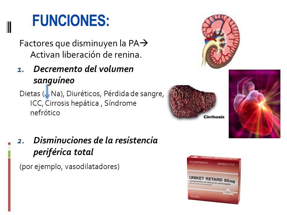 FUNCIONES: Factores que disminuyen la PA Activan liberación de renina. 1. Decremento del volumen sanguíneo Dietas ( Na), Diuréticos, Pérdida de sangre
