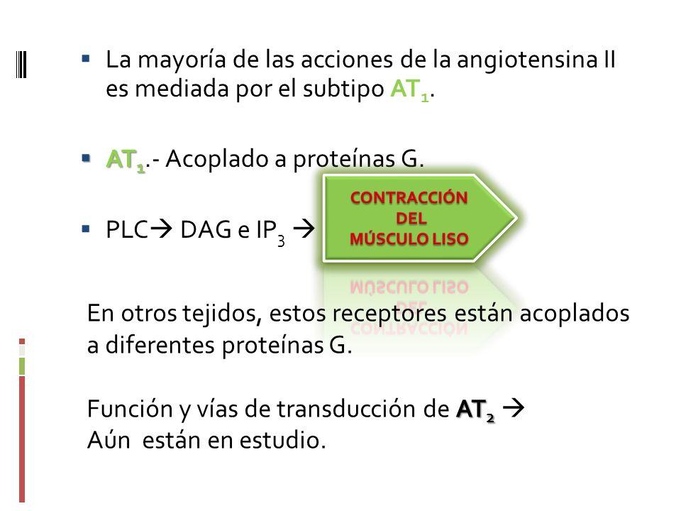 La mayoría de las acciones de la angiotensina II es mediada por el subtipo AT 1. AT 1 AT 1.- Acoplado a proteínas G. PLC DAG e IP 3 En otros tejidos,