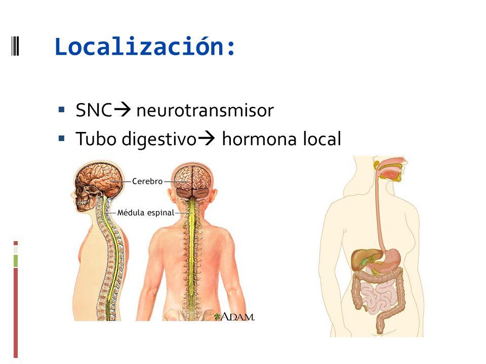 Localización: SNC neurotransmisor Tubo digestivo hormona local