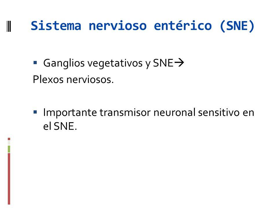 Sistema nervioso entérico (SNE) Ganglios vegetativos y SNE Plexos nerviosos. Importante transmisor neuronal sensitivo en el SNE.