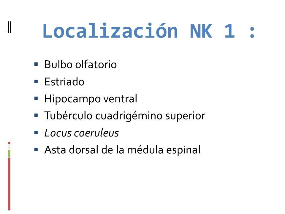 Localización NK 1 : Bulbo olfatorio Estriado Hipocampo ventral Tubérculo cuadrigémino superior Locus coeruleus Asta dorsal de la médula espinal