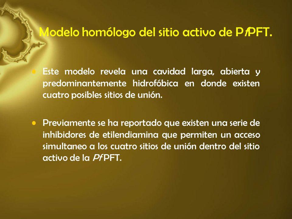 Modelo homólogo del sitio activo de PfPFT. Este modelo revela una cavidad larga, abierta y predominantemente hidrofóbica en donde existen cuatro posib