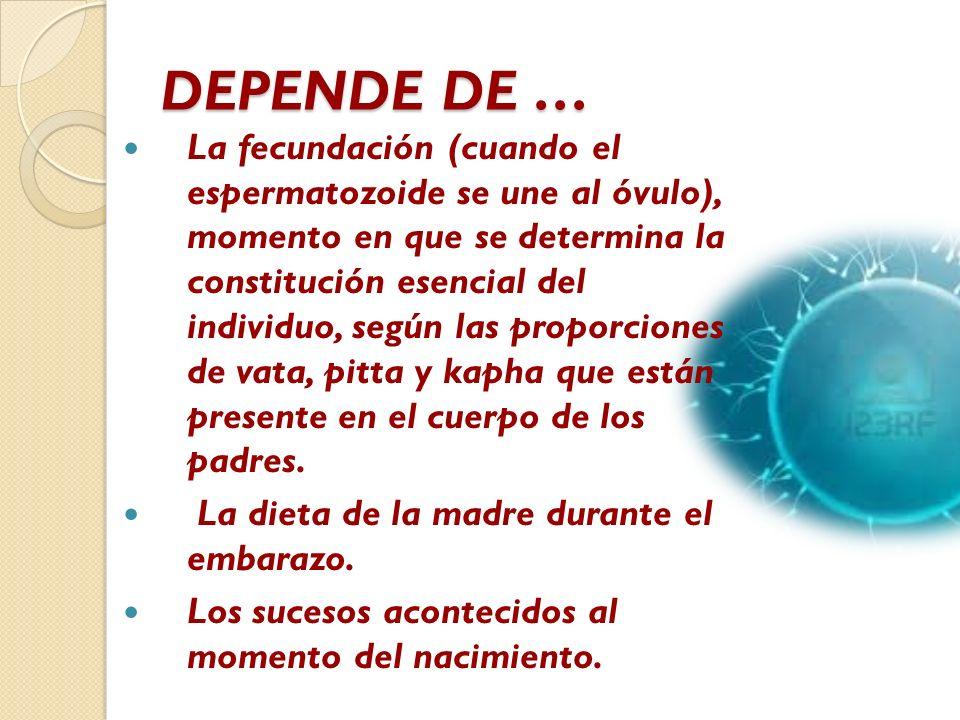 DEPENDE DE … La fecundación (cuando el espermatozoide se une al óvulo), momento en que se determina la constitución esencial del individuo, según las